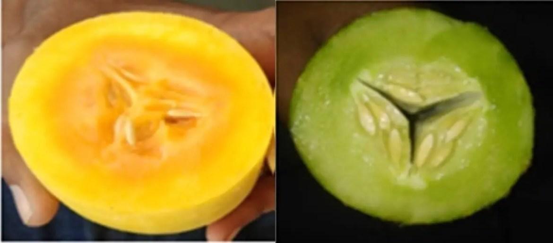 Orange cucumber