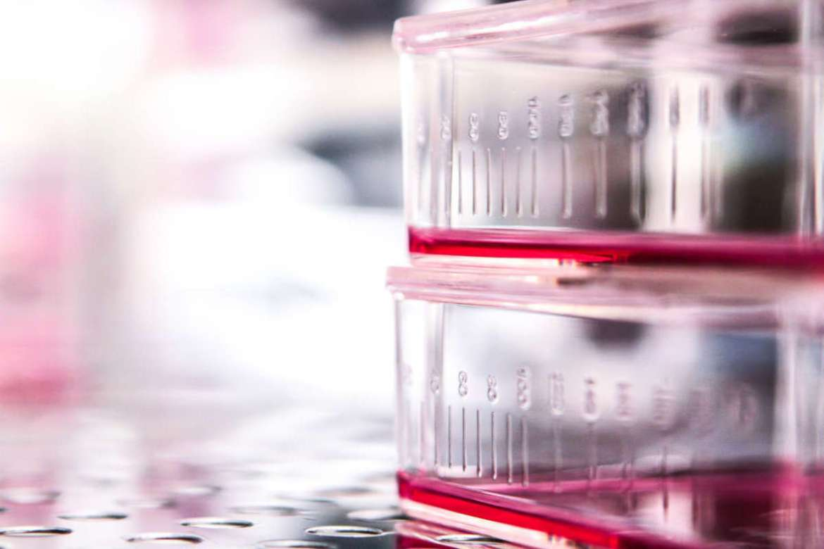 Cell Culture Technology