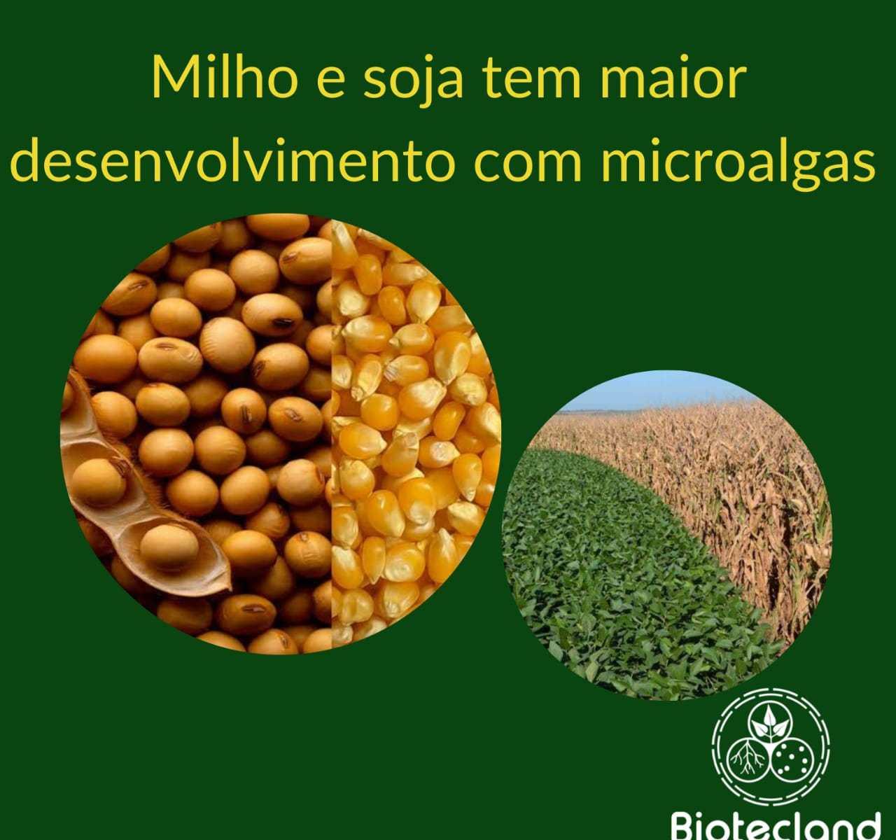 Milho, Soja e Algas