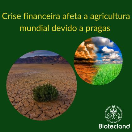 Crise financeira afeta a agricultura mundial devido a pragas