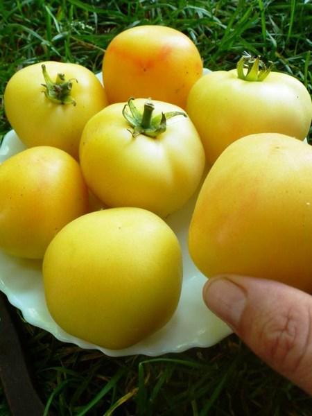 Tomate Garden Peach