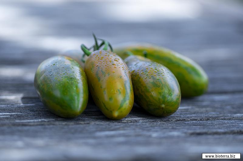 Green Sausage Tomate