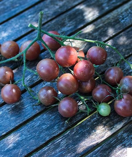 Black Cherry Tomate