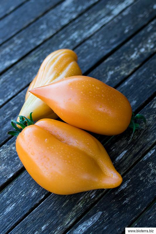 Buratino Tomate