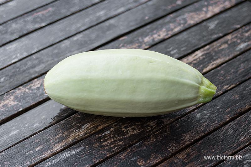 Zucchini Bianco di Sicilia