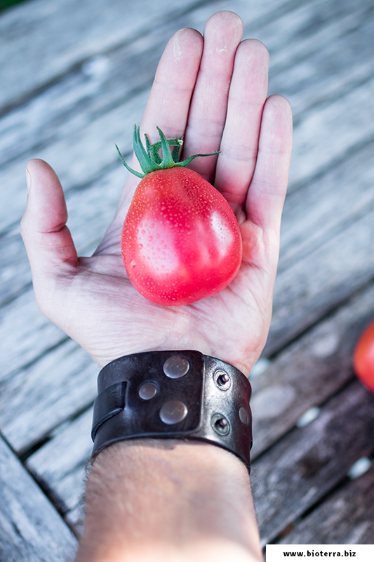 Strawberry Tomate