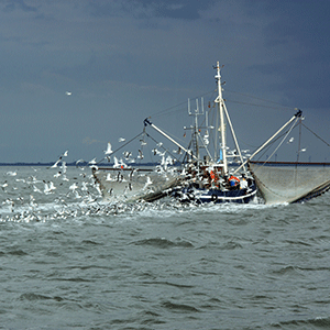 Shrimp boat on the North Sea © pxhere.com