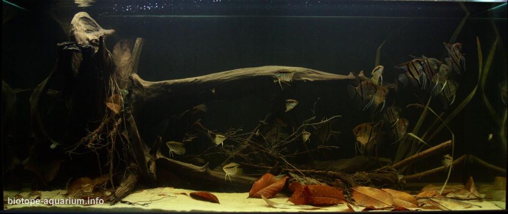 The mouth of the Orinoco River 620 L  Biotope Aquarium