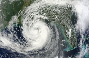 Dynamics in Hurricane Prone Forests