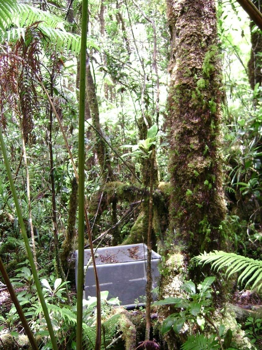 One of the mesocosms in the Hawaiian rainforest located in the mountains above the town of Hilo.