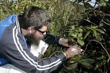 Wallace Meyer, the lead author, looking for snails at another rainforest site in Hawaii.