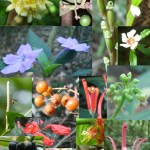 Some of the species found in our field sites (Photos by Letícia Couto Garcia)