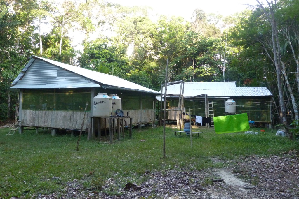 Heyman et al. 2014. The Estación Biológica Quebrada Blanco (EBQB) is a field research site in north-eastern Peruvian Amazonia. While the focus of research at EBQB has traditionally been on primate ecology and behaviour, researchers and students interested in other organisms are highly welcome. (Photo: E.W. Heymann).