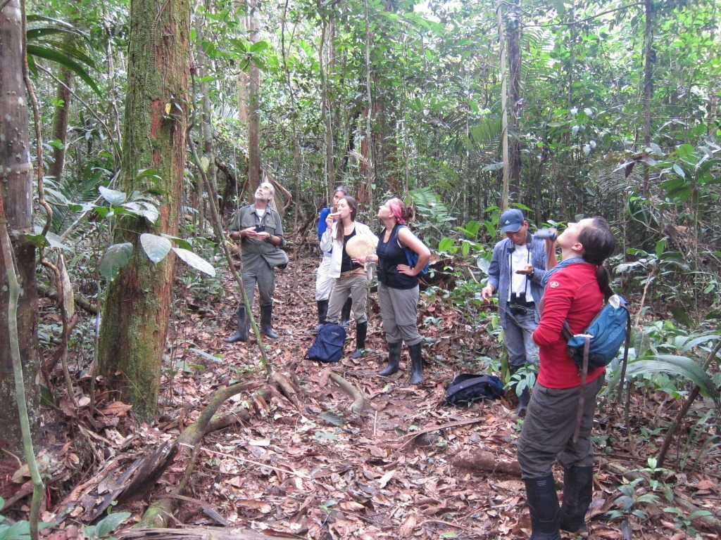 Heymann et al. 2014. Where are the monkeys? Although our tamarin study groups are very well habituated, observations can become challenging when they are high up in the canopy. The photo shows Eckhard W. Heymann (left) with students and a local field assistant during a practical. (Photo: Alexander Kratzenberg)