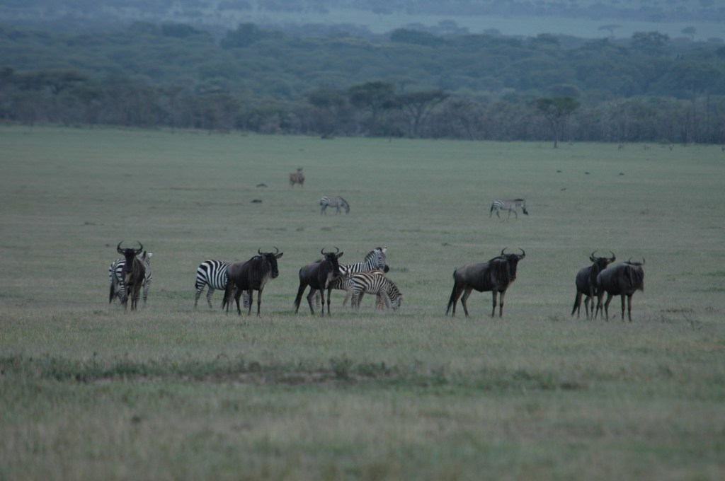 Photo 2: A grazing hotspot (Nyasyrori) in Serengeti National Park. Photo credit: James Grace.