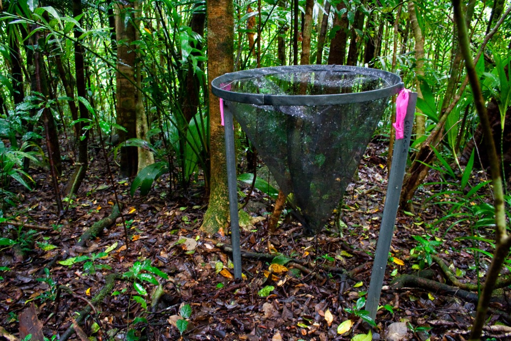 Fig. 2. Litterfall trap in the field at an upland cloud forest site on Mt Lewis, Queensland.