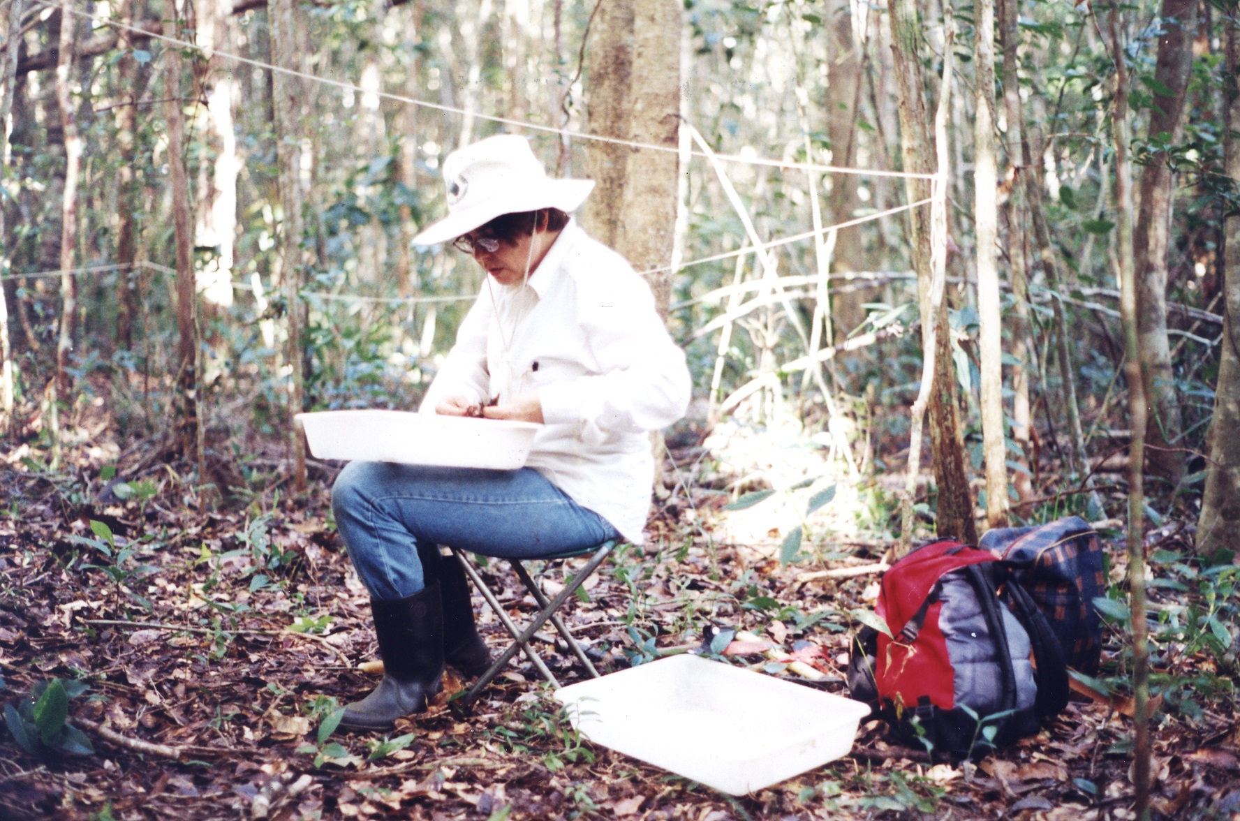 The lead author sorting samples in the Reserva Ecológica do Crasto (REC), Santa Luzia do Itanhy, Sergipe, Brazil