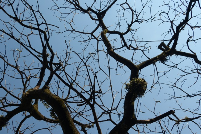 A completely leafless canopy.
