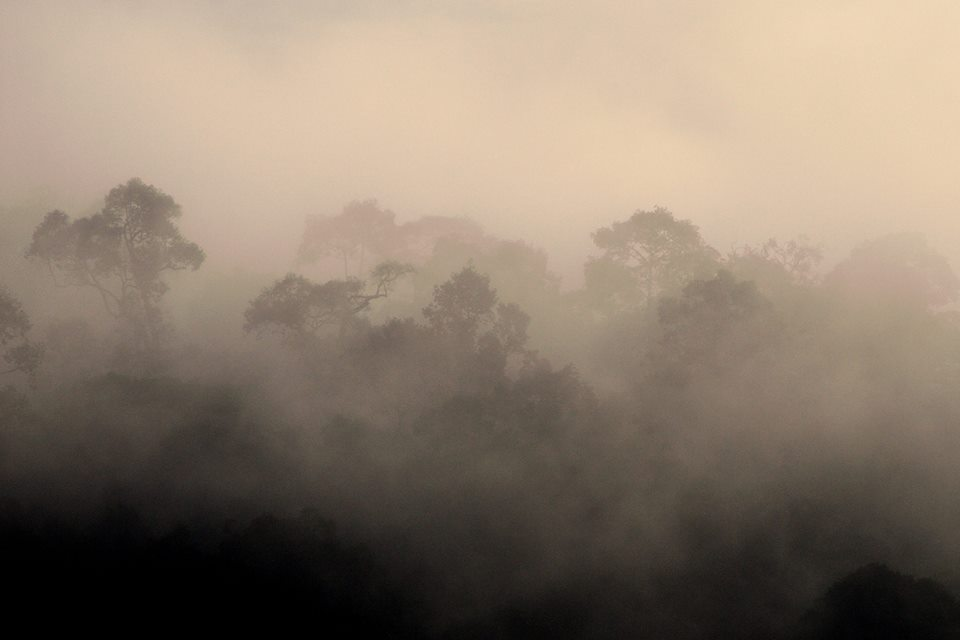Morning view of the forest in Khao Yai National Park. Photo by Kulpat Saralamba.