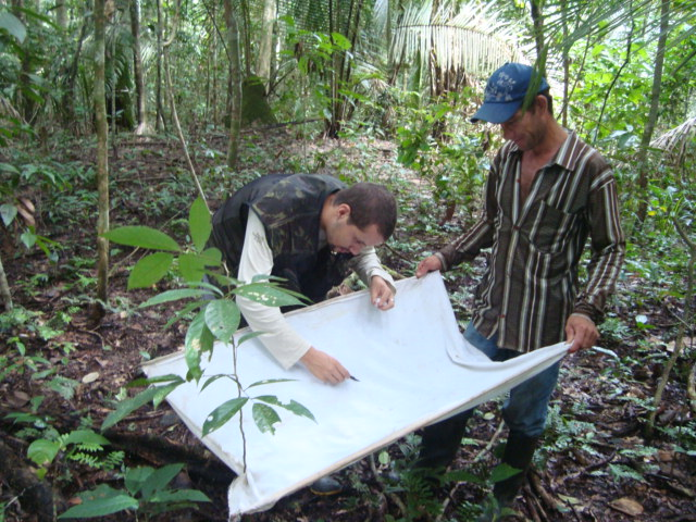 Figure 2. Wesley Dáttilo and his field assistant Roberto Stofel recording ant-plant interactions.