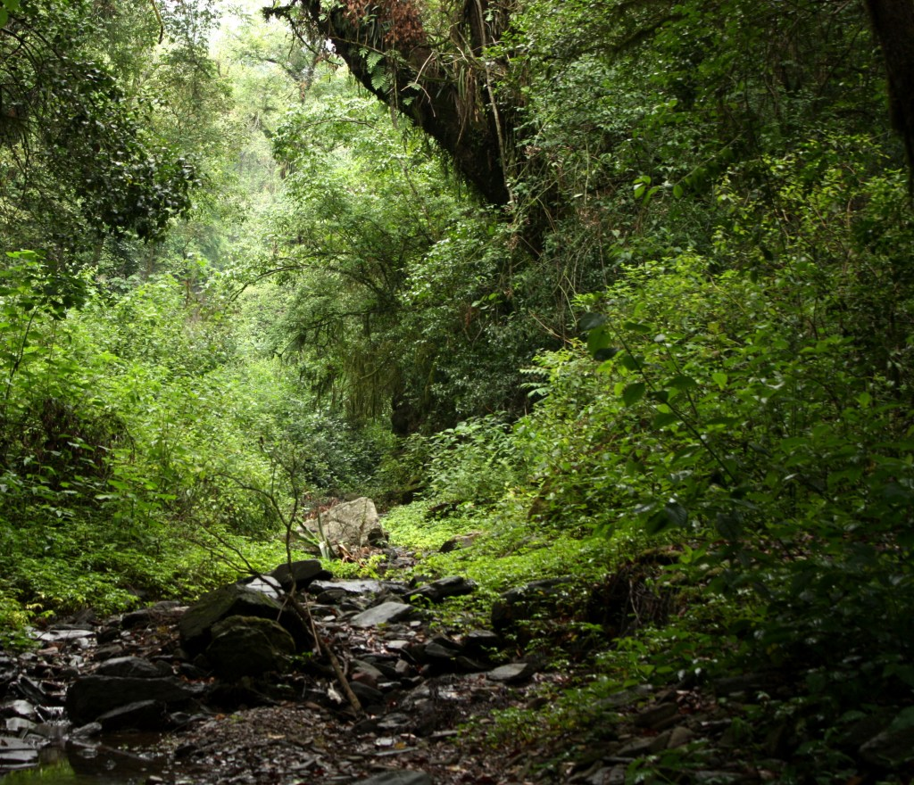 Typical landscape of lower montane forest sites located at the bottom of ravines in the Southern Yungas Andean forest. (Photo: Pedro Blendinger).