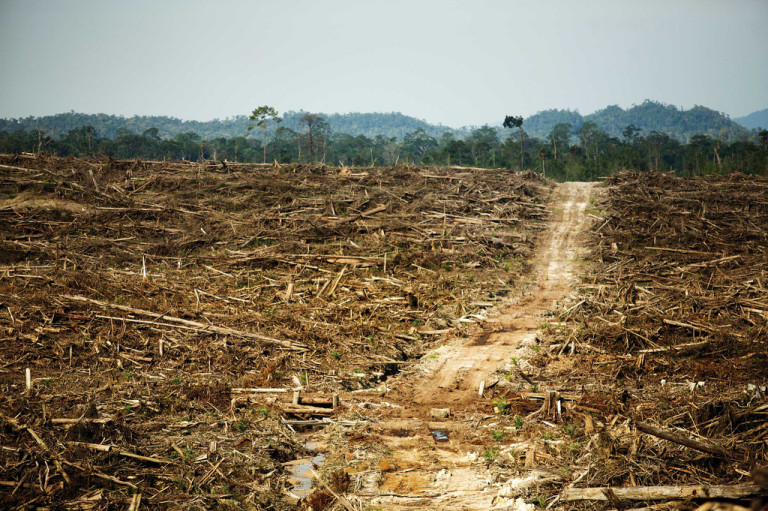 Clearing of primary rainforest for oil palm plantations in West Kalimantan, Borneo. (Photo: David Gilbert/RAN, CC-BY-NC 2.0)