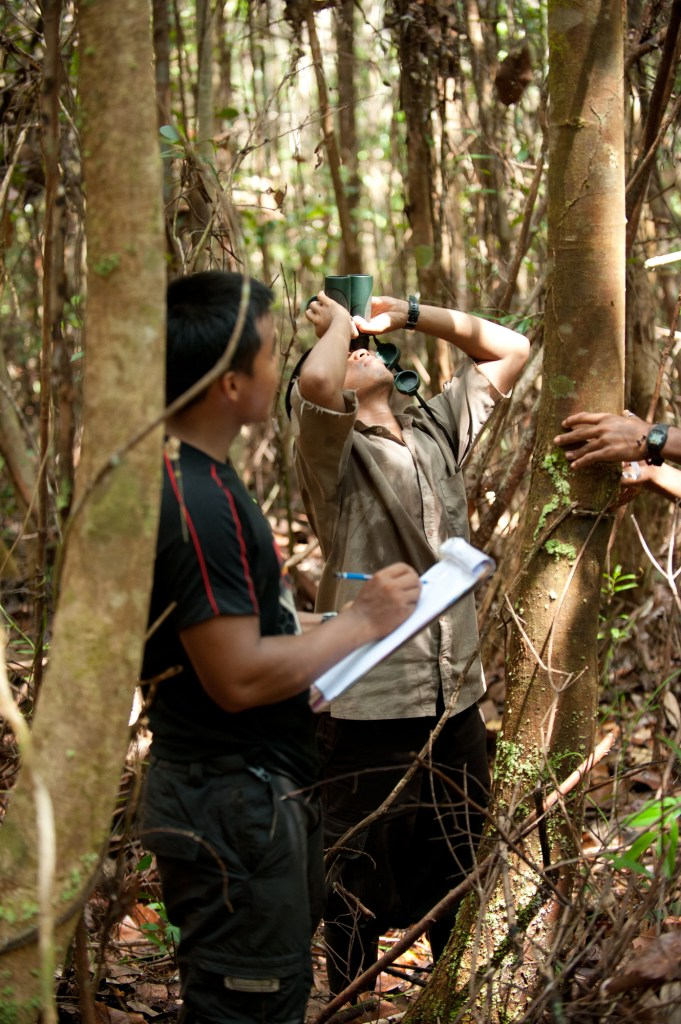 OuTrop team members collecting data on fruiting and flowering phenology in the Sabangau Forest, Central Kalimantan, Indonesia. (Photo: Andrew Walmsley/OuTrop).