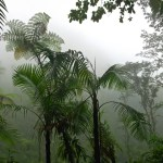 """Biotropica renames its """"Outstanding Paper"""" awards for two pioneering scientists"""