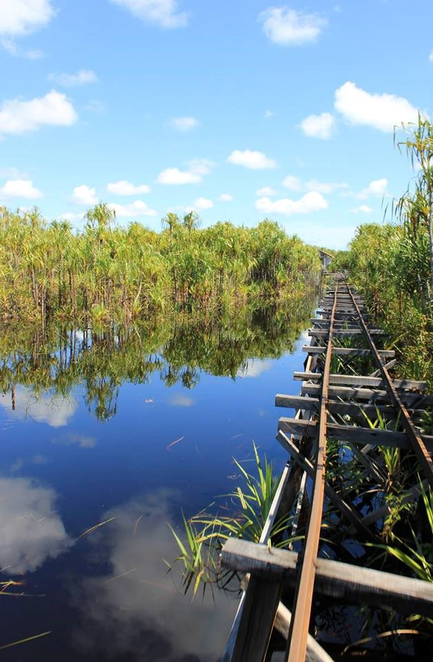 Photo: Railway to Sabangau Camp - © Marina Mulligan