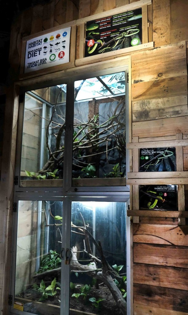 Vine snake and green viper enclosures in 2017