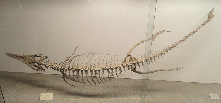 Image 2 A Metriorhynchus (Image credit Wikipedia)