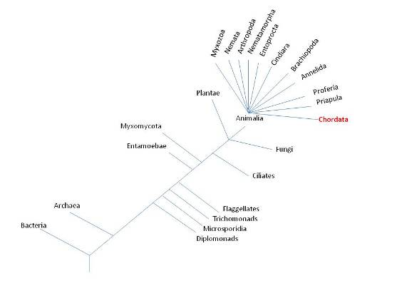 Pin Classification Of Organisms Chart on Pinterest