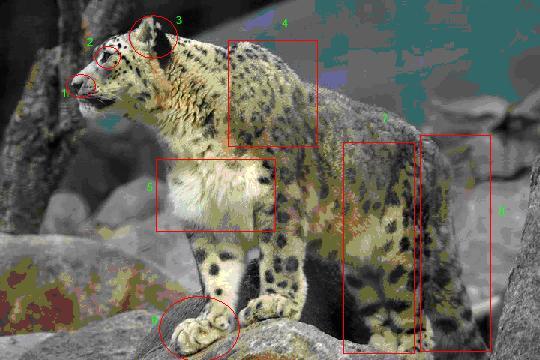 snow leopard anatomy diagram e46 alternator photo credit aaron logan