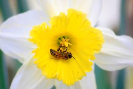Daffodil  Interactions