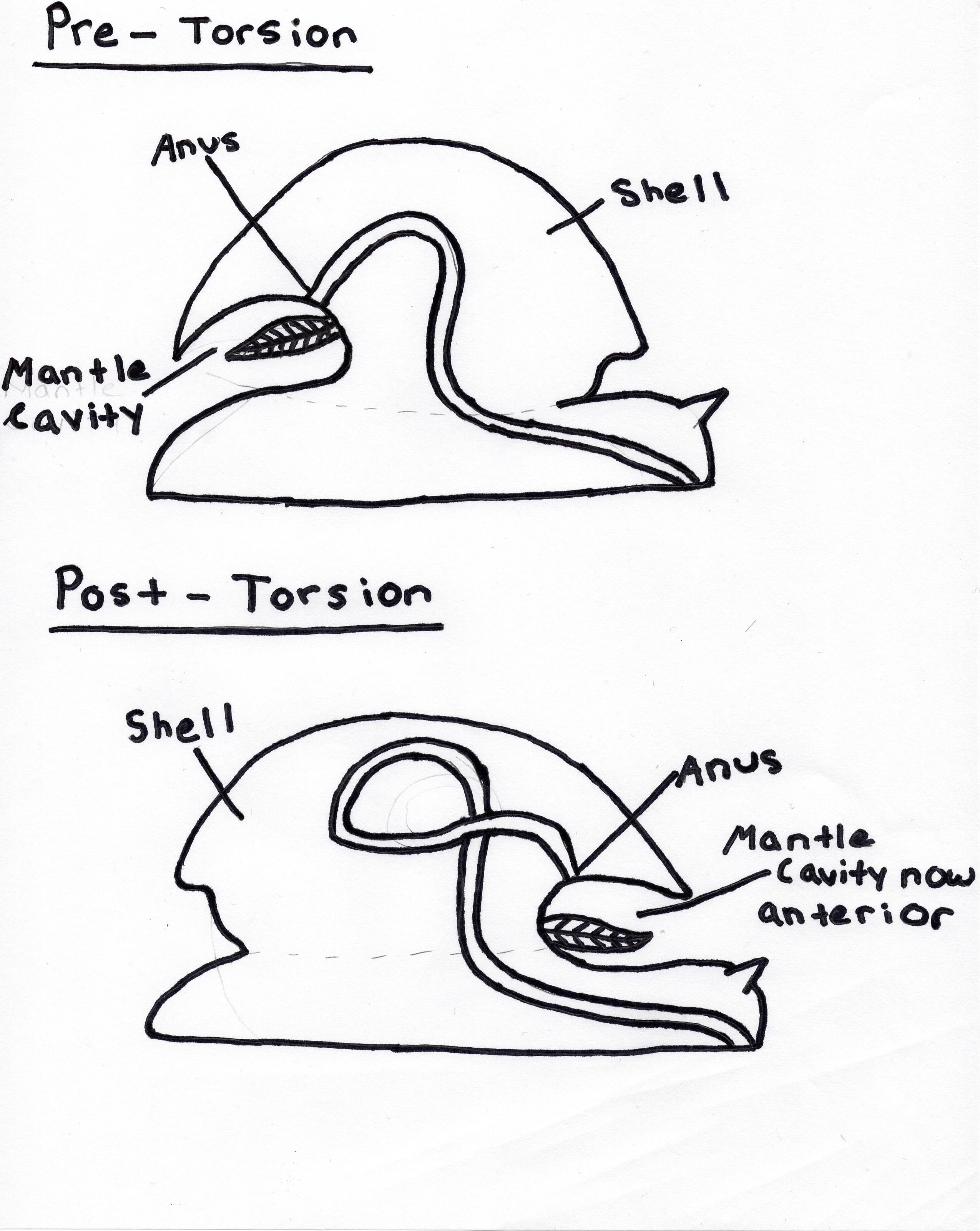 Neohelix Dentifera
