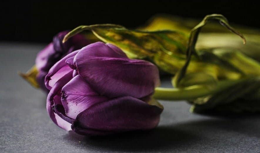 Los cosméticos caducan: Cómo cuidarlos