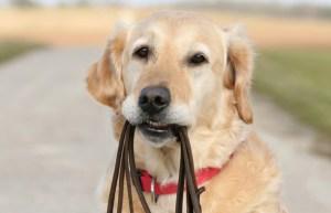 Canine classes