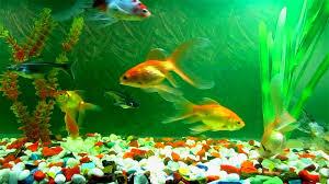 blog aquarium pic