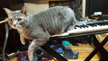 bob the cat on my synthesizer small