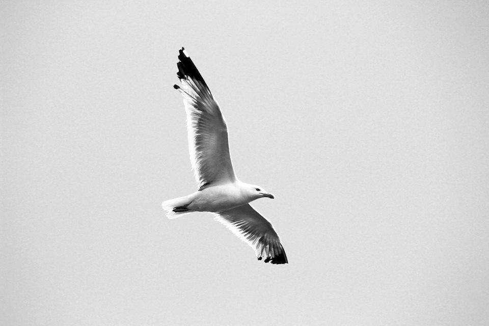 Bijela ptica, fotografija Dražen Zetić, otok Mamula, Boka kotorska, 2015.