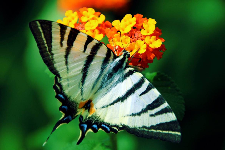Smrt je samo prvi let leptira, foto Dražen Zetić.