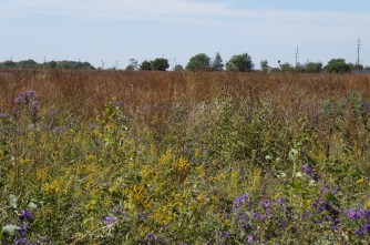 Blazing star, goldenrod, prairie sunflower, coreopsis, fuzzy aster, too many more to mention.