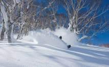 birchgrove-skier-powder