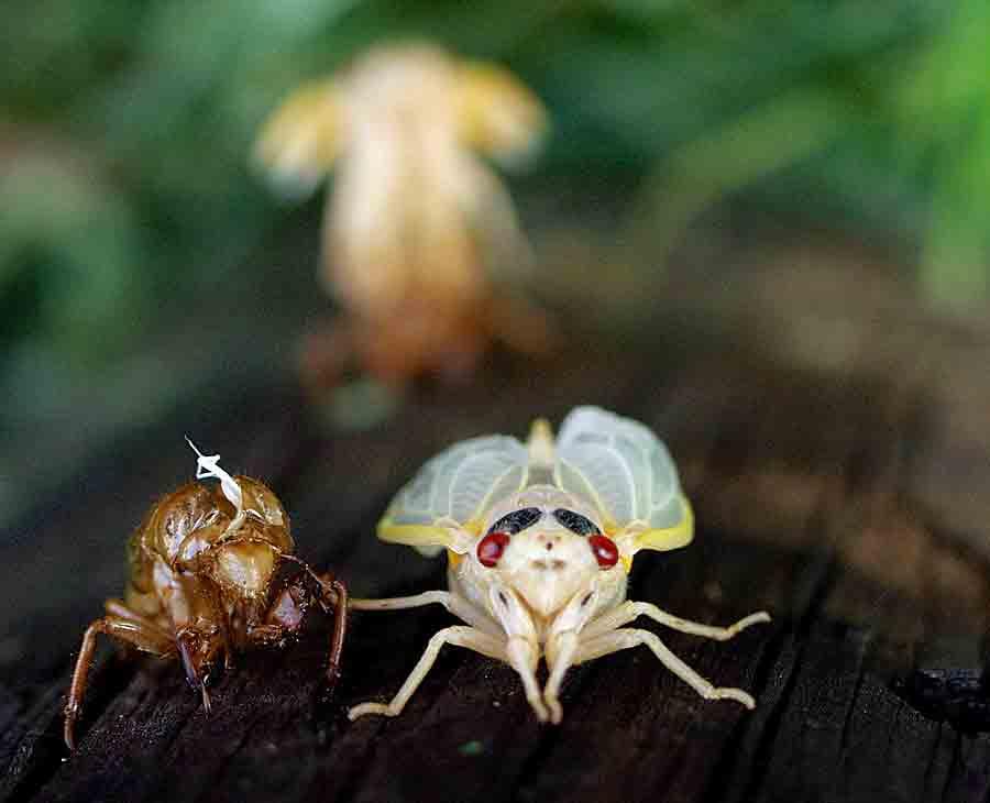 emerged-cicada-177