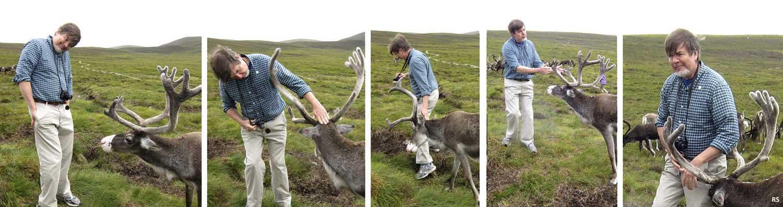 pushy reindeer