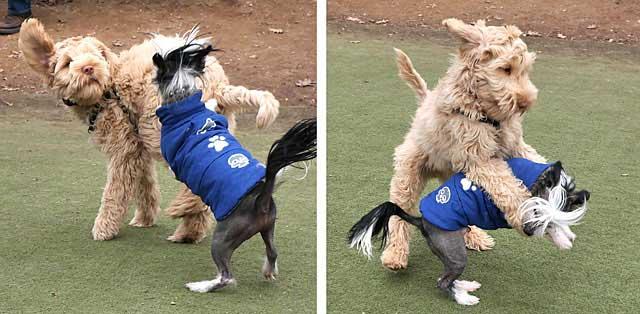 B-with-tiny-dog-Dec2013-DupCir-0122-r
