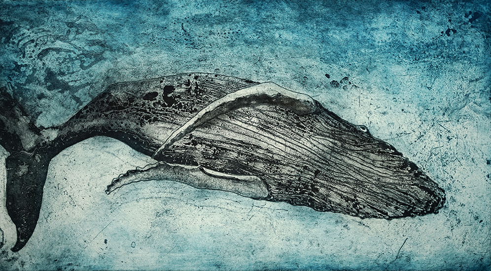 Marion MacPhee - Diving Humpback