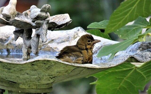 Heated Birdbaths – Is Electric An Easier Alternative To Solar?