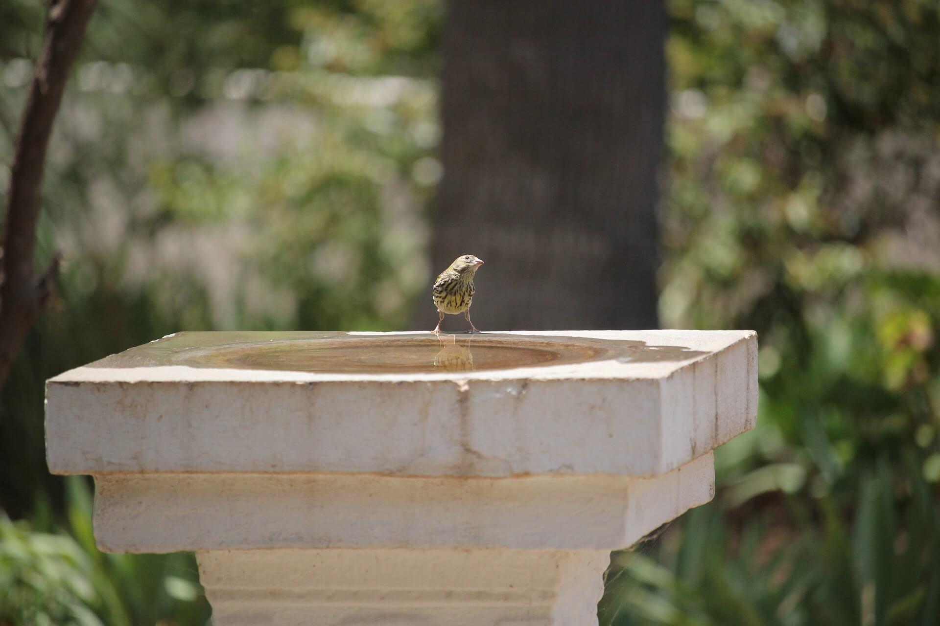 Pros And Cons Of Cheap Bird baths