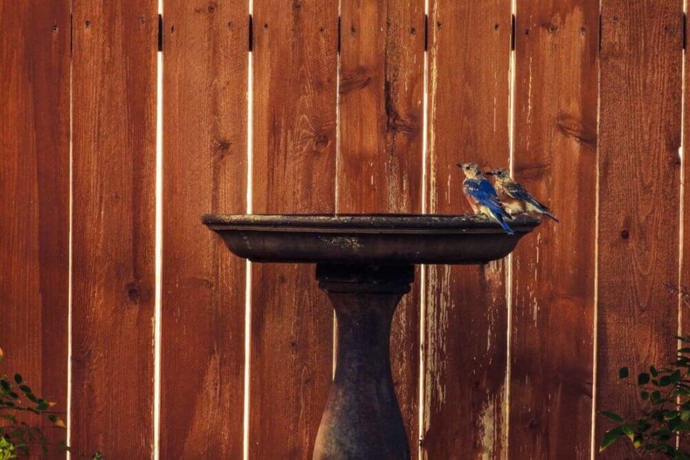 Unique Birdbaths That You Can Buy Or Build Yourself